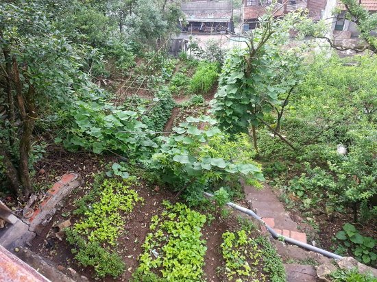 Cat Cat View Hotel: Vegetable garden
