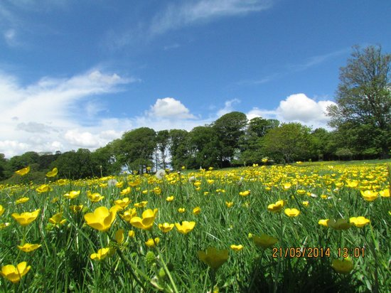 Trelissick: Meadows on return to Gardens