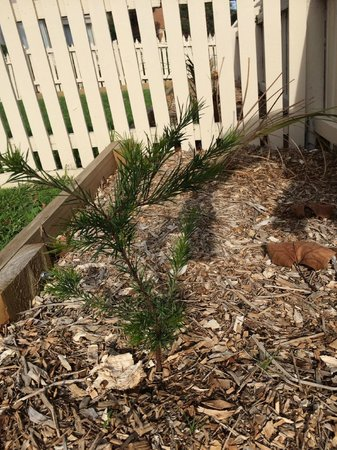 Quest Alphington: Rosemary Grevillea plants along front bounday garden beds