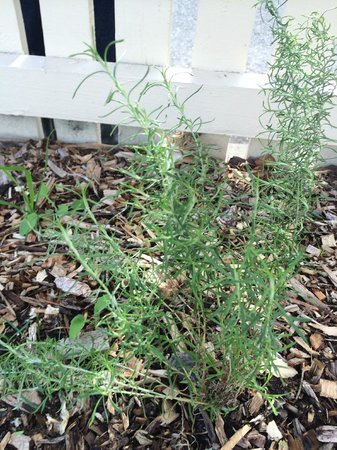 Quest Alphington: Everlasting Daisy on front side garden beds