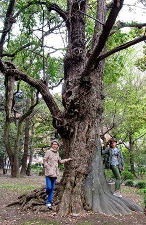 Hibiya Park : Бетонный ствол