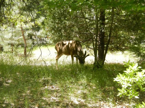 North Pines Campground : Wildlife