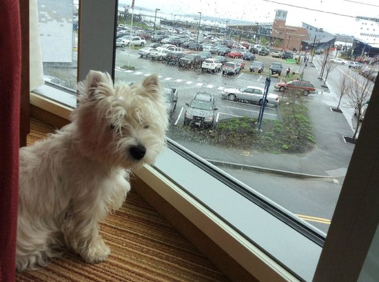 Residence Inn Portland Downtown/Waterfront: Pet Friendly luxury with a great waterfront view