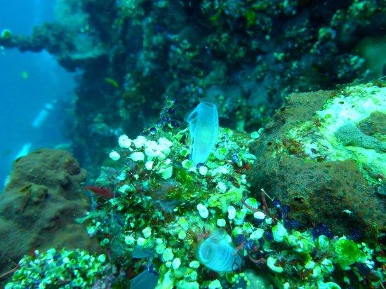 Adventure Divers Bali: Seasquirts!