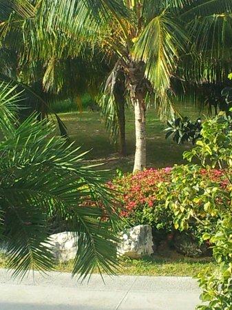 Melia Cayo Santa Maria: View from Balcony