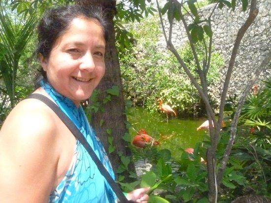 Xcaret Eco Theme Park: los flamencos