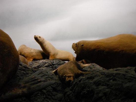 Royal British Columbia Museum: Seals
