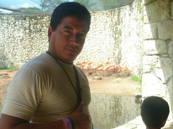 Xcaret Eco Theme Park: mas flamencos