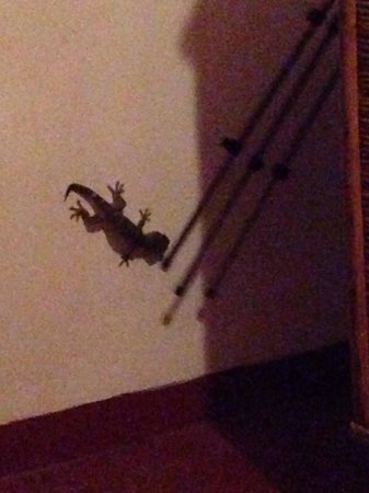 Makulay Lodge & Villas: Lizard in the middle of the night that has coming from the hole in the roof.