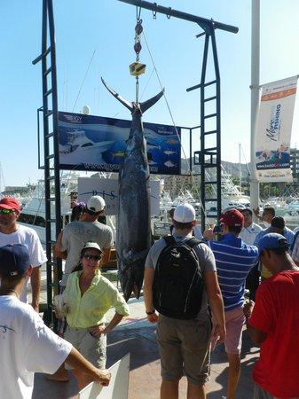 Portofino de Cabo Resort : Bisbee's Marlin Derby