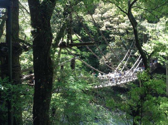 Iya Kazura Bridge: 外から見た橋