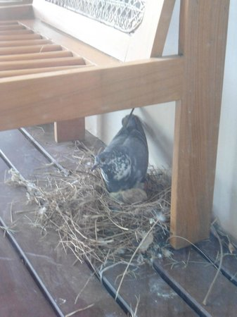 Kumudara Hotel Bagan : birds nest on our balcony!