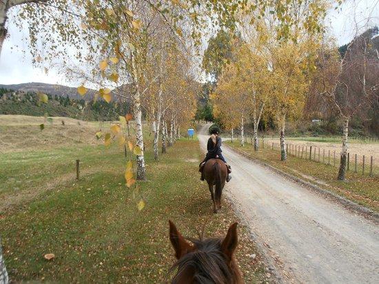 Mountain Valley Adventure Lodge : Horse trek along main road