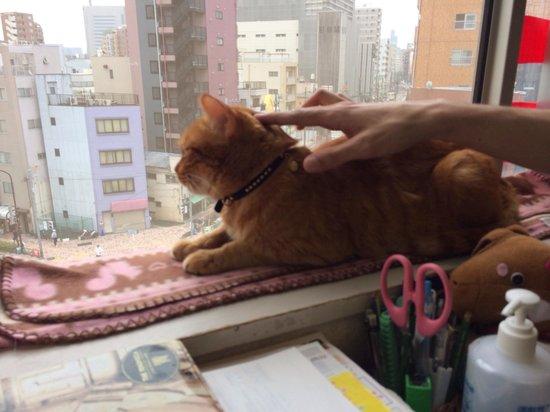 Cat cafe ASAKUSA NEKOEN: A bird's eye view of the city for a cat
