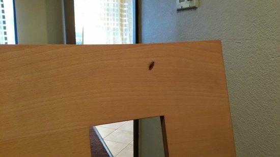 La Quinta Inn & Suites Houston Southwest: roach on the breakfast chair