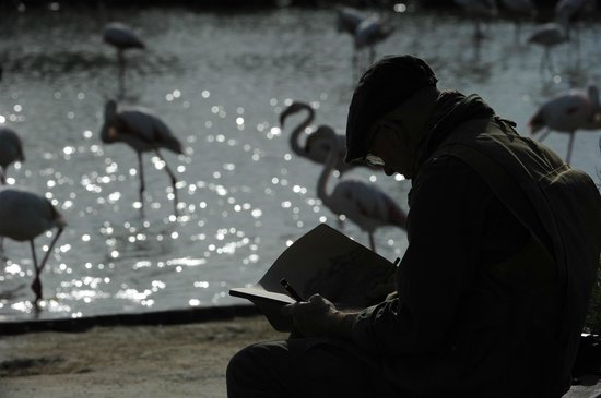 Le Parc Ornithologique de Pont de Gau : disegnatore naturalistico