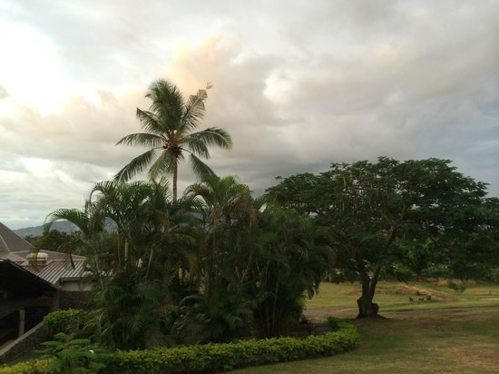 Novotel Nadi: view - check the coconut tree