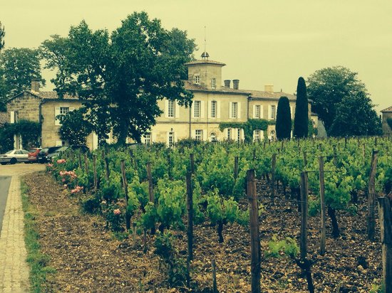Bordeaux Wine Travel : Chat Gazin