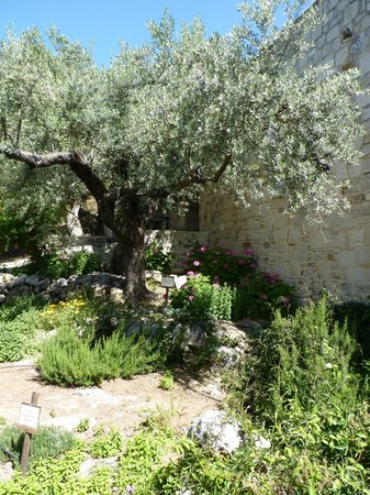 Eleonas : Olive tree and herb garden