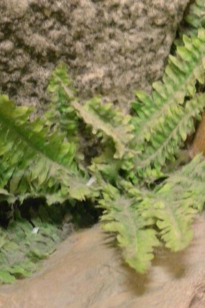 Nagahamaen: 部屋の中にある一坪庭の造花の草木の埃