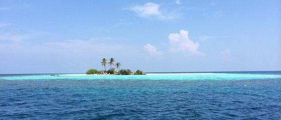 Ellaidhoo Maldives by Cinnamon: A hideaway island.....lush!!!