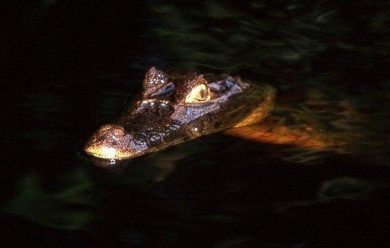 Caribbean Paradise Eco-Lodge: fauna