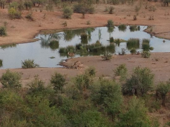 Victoria Falls Safari Lodge: View of the waterhole