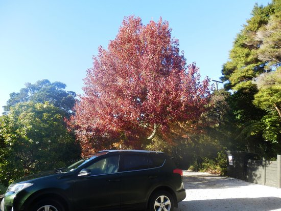 970 Lonely Bay: Autumn colours in grounds