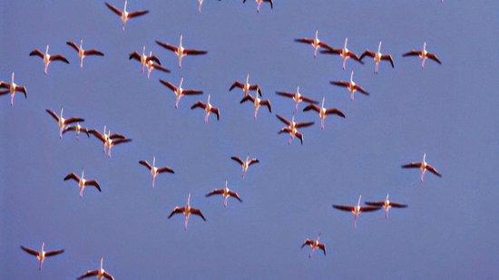 Parco Regionale Naturale Molentargius-Saline : Fenicotteri nel cielo di Cagliari