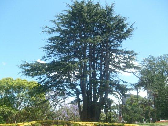 Albert Park: Park