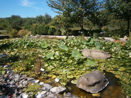 Jardin aux Plantes Parfumées la Bouichère: les nénuphars