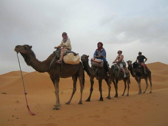 Camels House : désert