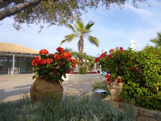 Avithos Resort gardens.
