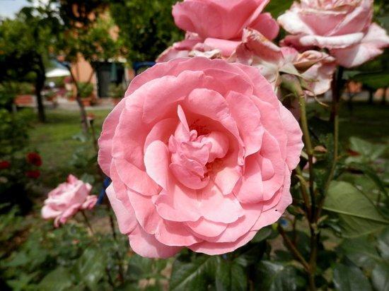 B&B Villa Maria Giovanna - giardino