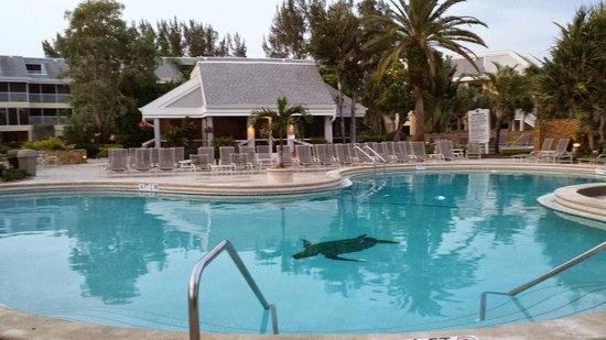 Tortuga Beach Club Resort Pool