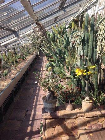 Botanical Gardens (Botanisk Have) : Cactus greenhouse