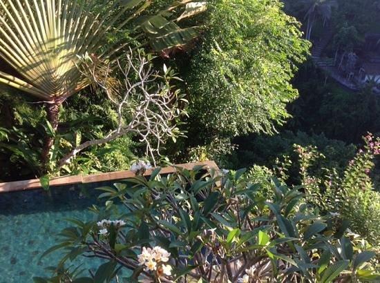 UBUD CLIFF VILLAS: magnifique piscine a debordement