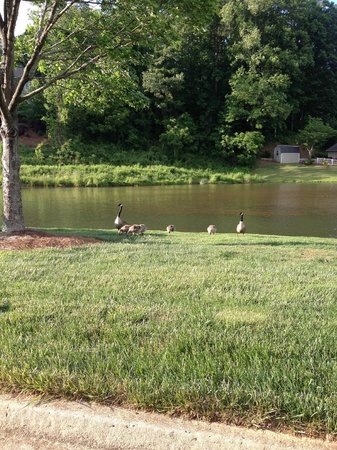 Kingwood Country Club & Resort: Pond on property with ducks