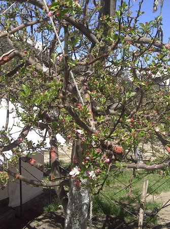 Apple Orchard Farm and Camping : Apple trees beginning to bloom