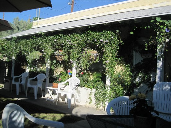 Windmill Market and Produce: The backyard - they have nice vines/ivy growing on the shed in the back