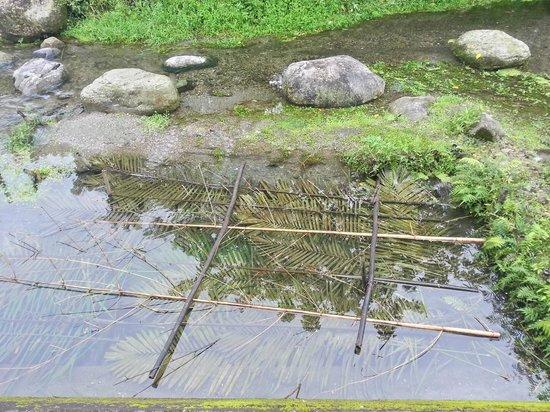 马太鞍溼地生态园区