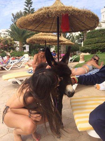 Vincci Resort Djerba: Ciko Siko ... La mascotte de l'hôtel