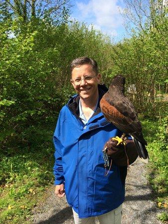 Burren Birds of Prey Centre : Walk with a hawk experience