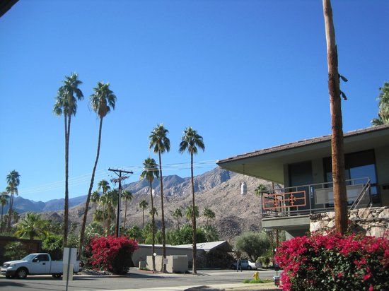 Caliente Tropics Resort : From anywhere on the grounds you get that spectacular Palm Springs view of blue sky, palm trees,