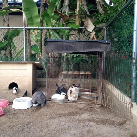 Hotel Alisei: they have bunnies, cats & a dog on site. loved it