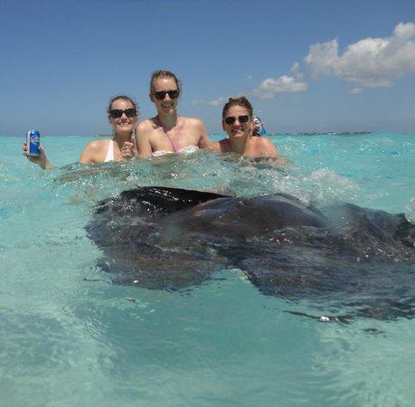 Cayman Turtle Divers: Stingray City