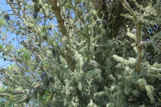Walk Hike Portugal: Tree on the way back