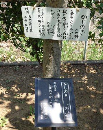 園内 - Bild von Manyo Botanical Garden, Ichikawa - TripAdvisor