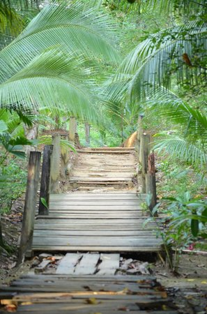 Red Frog Bungalows : walk to the resort