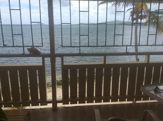 Colony Cove Beach Resort: pretty view